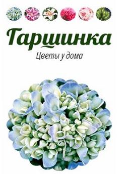 Гаршинка - Цветы у дома